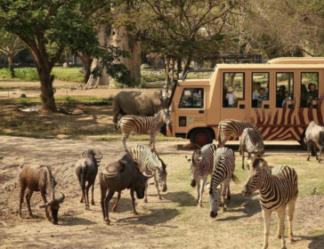 Guide And Tickets To Bali Marine And Safari Park With Kids