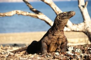 Flores And Komodo Island With Kids