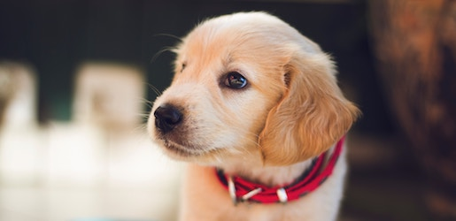 Where-To-Buy-Dogs-In-Singapore