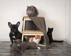 Top-Hotels-For-Pets-In-Singapore