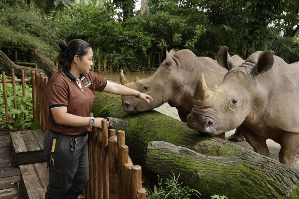 Behind-The-Scenes-Singapore-Zoo